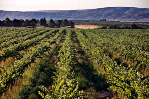 Explorer les vignobles de Washington